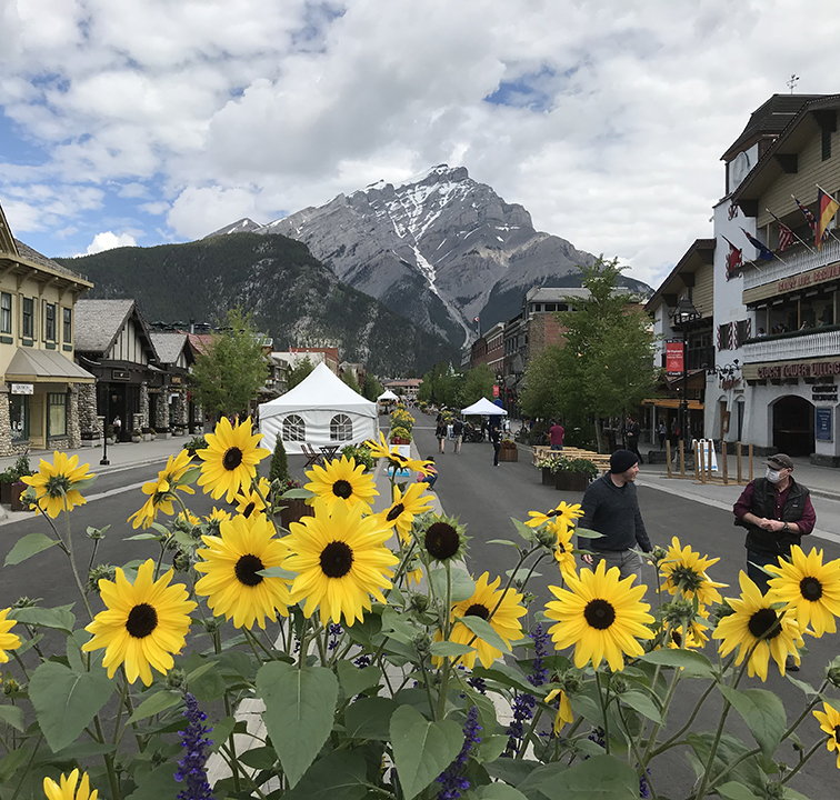 Sunflowers in Downtown Banff