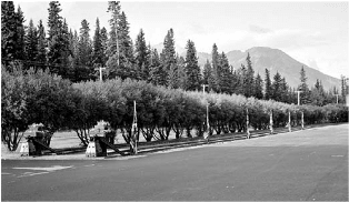 Queen's Willows at CPR Station circa 1950